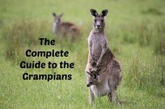 grampians guide