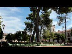 Olmo (Ulmus minor) y  Pino Carrasco (Pinus halepensis)  de Nuevo Baztán