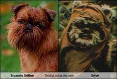 And this is why my BG's name is Wicket.