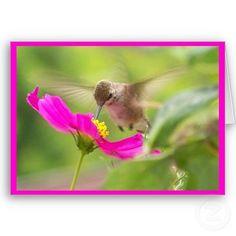 hummingbirds...