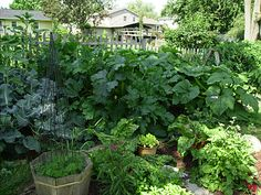 A list of vegetables, when to plant them, how to deter pests, and how to save seeds -- specific to each plant mentioned