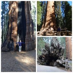 @Pit Stops for Kids had a great time exploring Sequoia & Kings Canyon and catching some shut-eye at Wuksachi Lodge and John Muir Lodge - check out her new feature (great pictures, right?)!