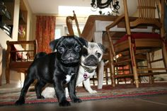 Darla & Bailey