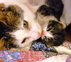 Awww...Cuddle time with Mommy!! : ) <3