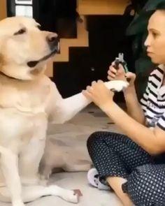 Funny Animal Jokes, Funny Dog Memes, Funny Dog Videos, Baby Animals Super Cute, Cute Little Animals, Cute Animal Videos, Cute Animal Pictures, Cute Funny Dogs, Cute Funny Animals