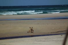 The quintessential Fraser shot as shared by Carol McJannett  #eurongbeach #fraserisland #queensland #australia www.eurong.com.au #deals