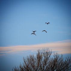 Vinter ved Søholm Sø #visitfyn #fyn #nature #visitdenmark #naturelovers #natur #denmark #danmark #dänemark #landscape #nofilter #assens #mitassens #vildmedfyn #fynerfin #assensnatur #vielskernaturen #birds #visitassens #instapic #picoftheday #january
