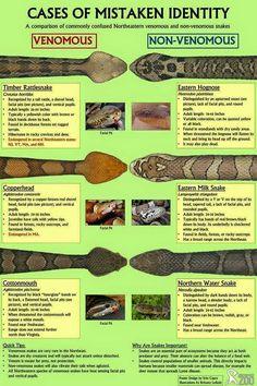 Venomous vs nonvenomous snakes