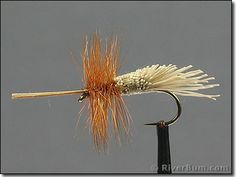 caddis fly - Google Search