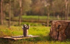 I'm strong ! #biceps #lemur