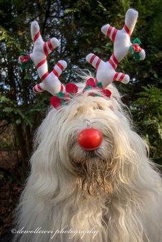 Sarah the red nose reindeer shelfie | by dewollewei
