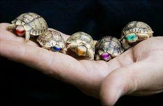 ninja Turtless