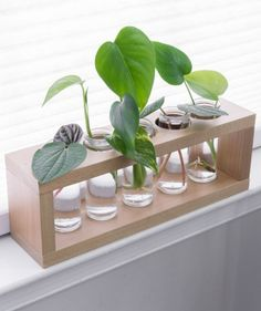 A DIY plant propagation station is a cute way to display plants while propagating them in water. The glass tubes also help you monitor root development! #plantpropagation #propagationstation #outdoorwood Plants In Jars, Water Plants, Plant In Glass, Plant Cuttings, Creation Deco, Diy Planters, Plant Design, Outdoor Plants, Plant Decor