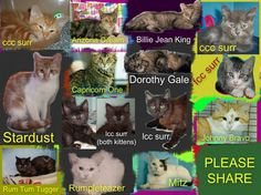 These cats/kittens desperately need a save by 3pm Wed 10/12/14. If you are a rescue or know a rescue that can help to contact Renbury Farm Animal Shelter, NSW