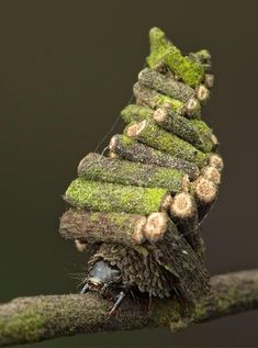 Cool Insects, Bugs And Insects, Weird Insects, Cool Bugs, Moth Caterpillar, Beautiful Bugs, Beautiful Butterflies, Creature Design, Macro Photography