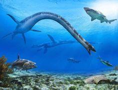 Um plesiossauro de pescoço extremamente longo caça peixes no mar de Bearpaw, nesta ilustração feita para ser vendida e ter seu valor doado para a construção de um novo museu paleontológico no Canadá.