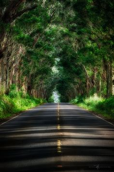 """The """"Tunnel of Trees"""" on Kauai is one of the most unique and beautiful drives in Hawaii. I want to go to Kauai! Hawaii Tours, Hawaii Vacation, Hawaii Travel, Dream Vacations, Vacation Spots, Kauai Hawaii, Lihue Kauai, Poipu Kauai, Poipu Beach"""