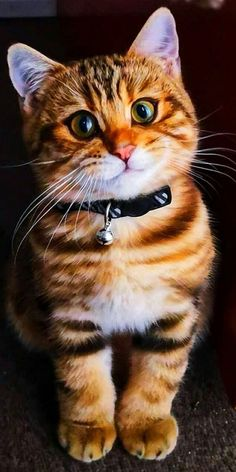 Cute Cats And Kittens, Cool Cats, Kittens Cutest, Pretty Cats, Beautiful Cats, Animals Beautiful, Cute Baby Animals, Animals And Pets, Animal Antics