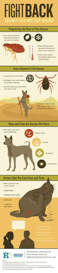 How can you tell if your pet has been bitten by a flea or tick? Common signs include scratching, chewing, licking, hair loss, and scabs or hot spots. Take a look at this San Jose animal hospital infographic to learn how to keep fleas and ticks away!