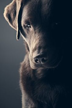 Van_essa shared a photo from Flipboard All Dogs, Fine Art America, Labrador Retriever, Van, Magazine, Articles, Awesome, Diy Dog, Happy