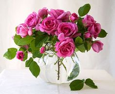 of the Week – 'Gertrude Jekyll' Gertrude Jekyll rosebush . I really REALLY want one again asap! I really REALLY want one again asap! Beautiful Flower Arrangements, Floral Arrangements, Flowers Nature, Pretty Flowers, Pink Roses, Pink Flowers, Cut Flowers, Tea Roses, Exotic Flowers