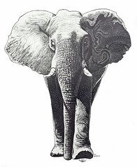 Elephants Drawings - The Elephant  by Kean Butterfield