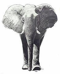 Elephants Drawings - The Elephant  by Kean Butterfield