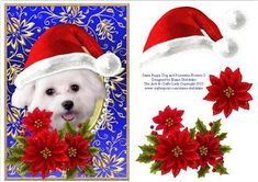 Santa White Puppy Dog Bichon Frise and Poinsettia Flowers 2 on Craftsuprint designed by Elaine Sheldrake - A gorgeous white Bichon Frise puppy dog wearing a red Christmas Santa hat with some beautiful red poinsettia flowers for you to decoupage if you wish, if not it makes a lovely quick card front that is sure to please. Also available with other coloured backgrounds and other breeds of cats and dogs. - Now available for download!