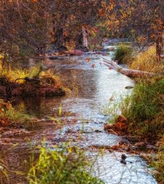 Our Creek in the Fall