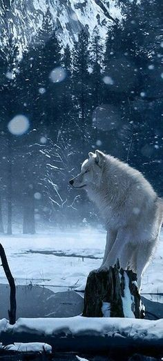 #Winter and #White #Wolf --> A Lot of #BeauTy #PiCs and #Smart #TiPs. FolloW Please! https://www.pinterest.com/moycomp