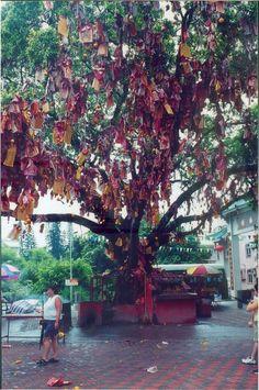 Wishing Tree in Lam Tsuen area of Hong Kong
