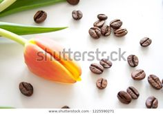 Orange tulip flower with coffee beans on white background