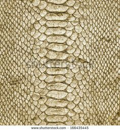 Snake skin close up detail