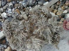 pebble pounded groyne