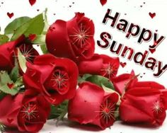 Super sunday wishes| sunday quotes wishes| sunday good morning wishes| sunday quotes, photo, gif, photography, message, sms, festival wishes image| #sunday #sunday_wishes Good Morning Love You, Good Morning Sunday Images, Sunday Photos, Good Morning Wishes, Happy Sunday, Sunday Wishes Images, Super Sunday, Latest World News, Gif Pictures