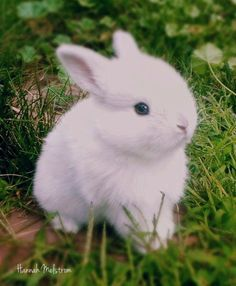 If you are looking for a family pet which is not only cute, but easy to keep, then look no further than a pet bunny. #cutebabypuppies