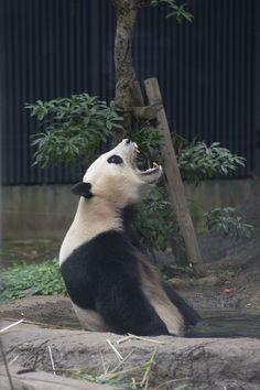 I'm so sick of bamboooooooooo!