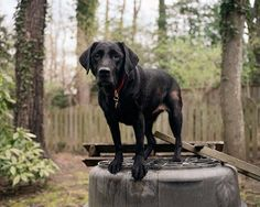 Charlotte Dumas photographs the rescue dogs of 9/11