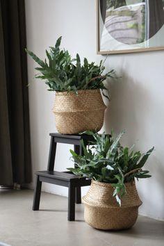 Plant in rieten mand en krukje IKEA