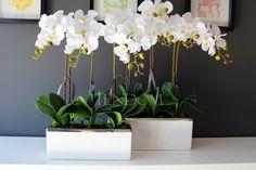 tenDOM... bo w domu najlepiej: LIMITOWANA seria zestawów kwiatowych