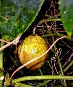 "Repost from Instagram ! #WeLike ! #Madinina by @amande_d0uce ""Fruit de la Passion / Maracuja... Lieu: Saint-Joseph Photo: Samsung Galaxy Note 5  #fruit #fruitdelapassion #sun #beautemps #ig_martinique #ig_caribbean #nature #tropiques  #tropical #matinik_pictures #madinina #igworldclub #phototag_it #shotaward #westindies #martinique #caribbean #picoftheday #westindies_pictures #chaleur #ocarribeano #all_shots #world_shotz #ig_captures #love_natura #photooftheday #worlderlust :)""…"