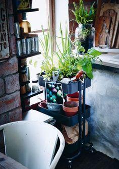 Tarjoiluvaunu, johon on istutettu viherkasveja. Alimmilla hyllyillä on tilaa ruukkujen ja muiden viljelytarvikkeiden säilyttämiseen.