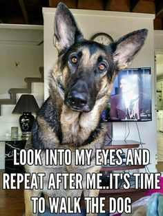 My GSD is so smart, I spell the word walk and he knows, gets all excited and goes to grab his leash!