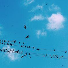 파랗네 사진 콘테스트 / It's Blue photo contest #5 / biirdzero
