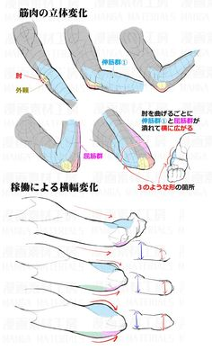 Learn To Draw People - The Female Body - Drawing On Demand Arm Anatomy, Anatomy Poses, Body Anatomy, Anatomy Art, Body Reference Drawing, Hand Reference, Anatomy Reference, Art Reference Poses, Body Tutorial