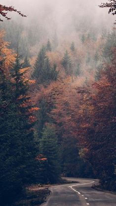 59 Ideas For Nature Wallpaper Phone Trees Forests Fall Images, Fall Pictures, Nature Pictures, Halloween Pictures, Landscape Background, Landscape Wallpaper, Autumn Wallpaper Tumblr, Forest Wallpaper, Autumn Phone Wallpaper