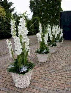 36 Ideas patio garden ideas flower pots plants for 2019 Big Planters, Outdoor Planters, Little Gardens, Small Gardens, Decoration Plante, Hydrangea Garden, White Gardens, Garden Planning, Backyard Landscaping
