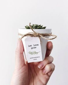 How to pick meaningful and cheap wedding favors---White Painted Terra Cotta Pot Succulent Wedding Favours, Baby Shower Favours, Mini Succulent Favours, Modern Wedding, Rustic Wedding Wedding Favors And Gifts, Rustic Wedding Favors, Bridal Shower Rustic, Wedding Decorations, Diy Wedding Souvenirs, House Decorations, Wedding Giveaways Ideas Souvenirs, Beach Souvenirs, Decor Wedding