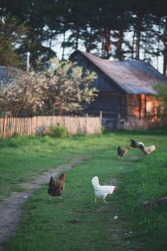 "oldfarmhouse: "" Family Farm https://www.flickr.com/gp/ """