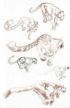 Drawing Animals Academy of Art Character and Creature Design Notes: Character Design Animal Sketches, Animal Drawings, Drawing Animals, Cat Drawing, Drawing Sketches, Sketching, Sketch Art, Pet Anime, Cat Anatomy